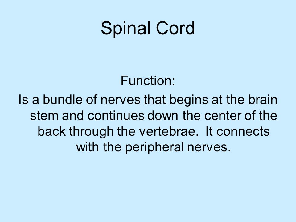 Spinal Cord Function: