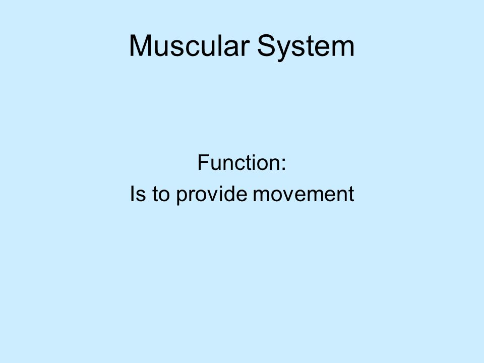 Muscular System Function: Is to provide movement