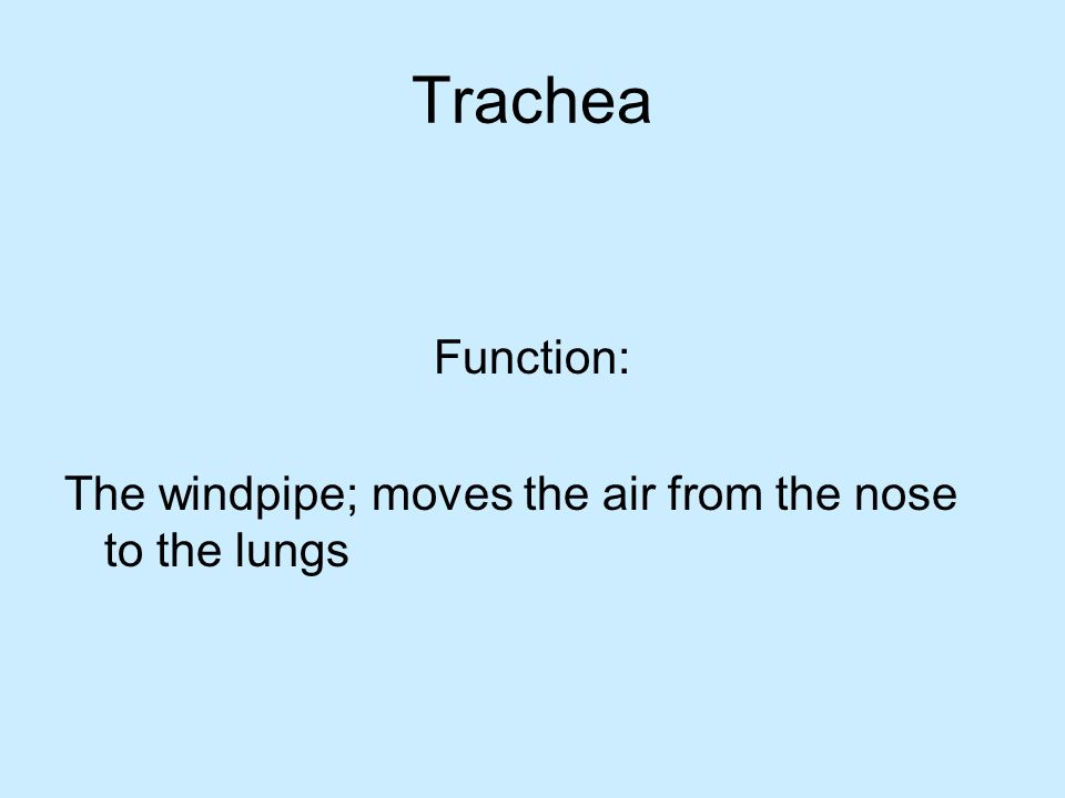 Trachea Function: The windpipe; moves the air from the nose to the lungs