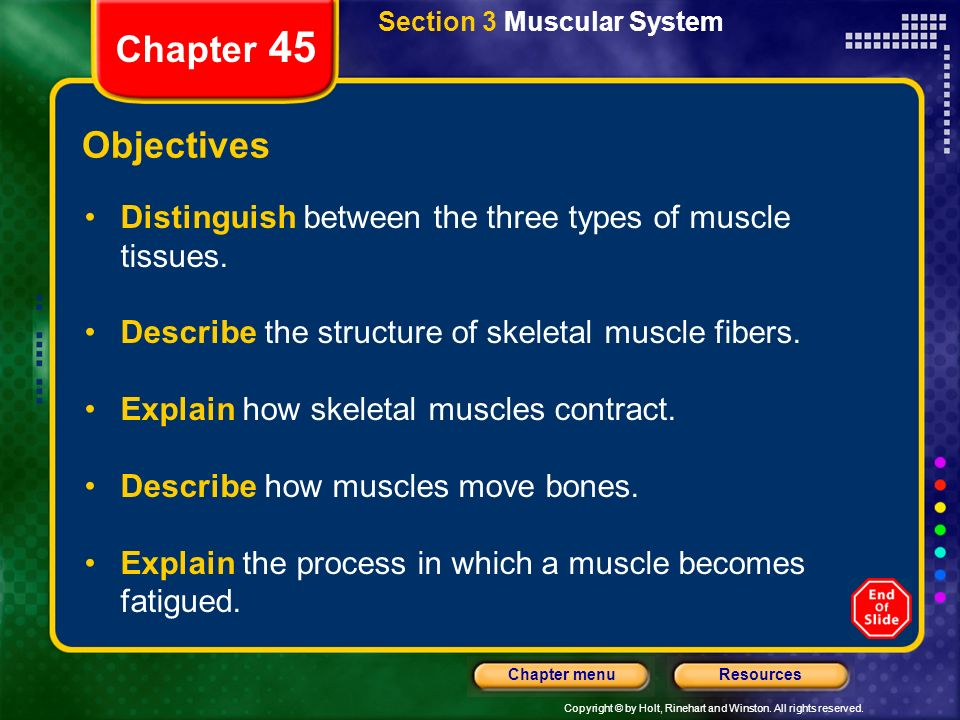 how to use this presentation - ppt download, Muscles