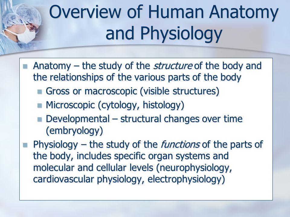 Niedlich Anatomy And Physiology Overview Zeitgenössisch - Anatomie ...