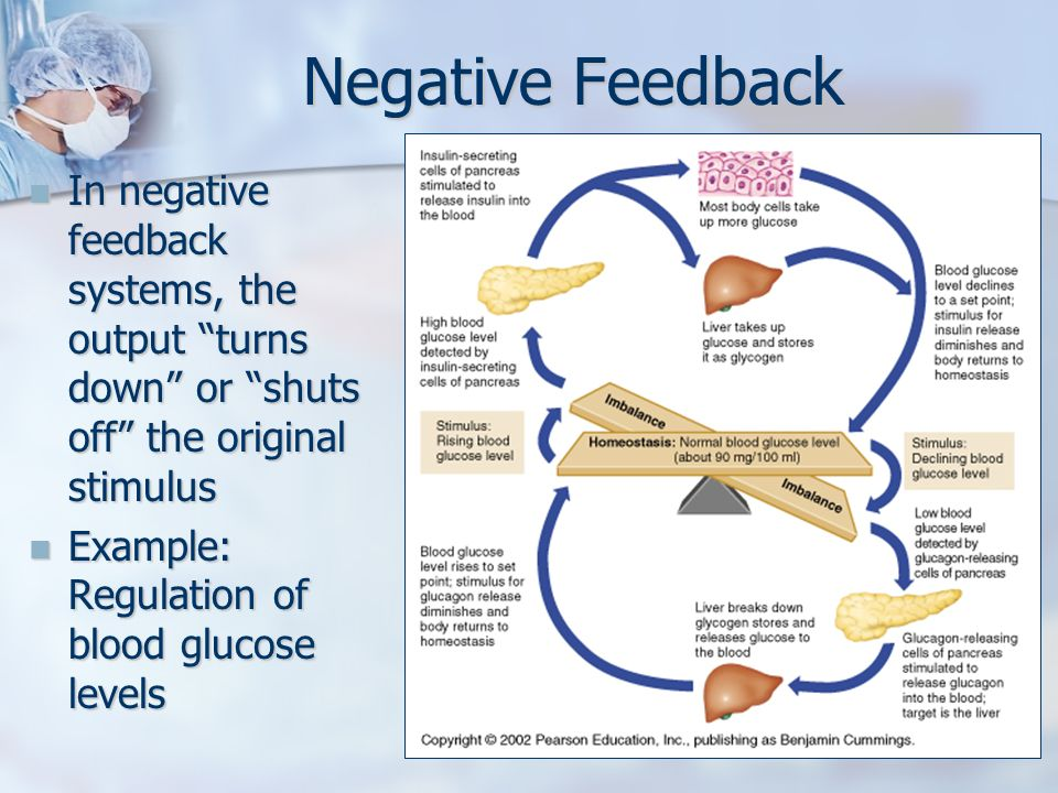 Negative feedback in anatomy 6459597 - follow4more.info