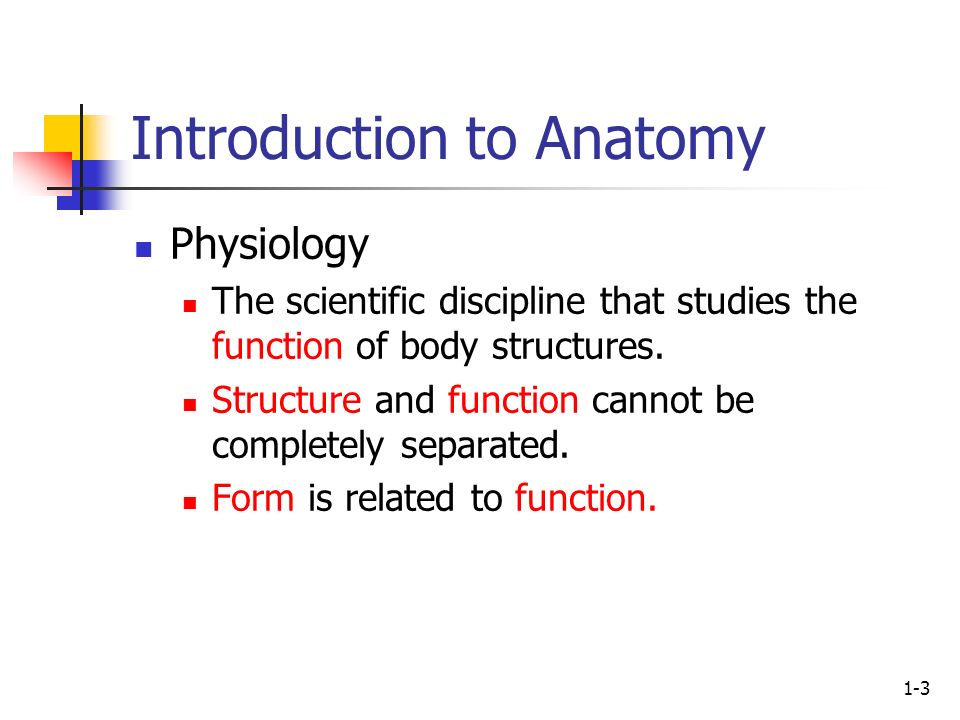 Human Anatomy First Edition Mckinley Oloughlin Ppt Video
