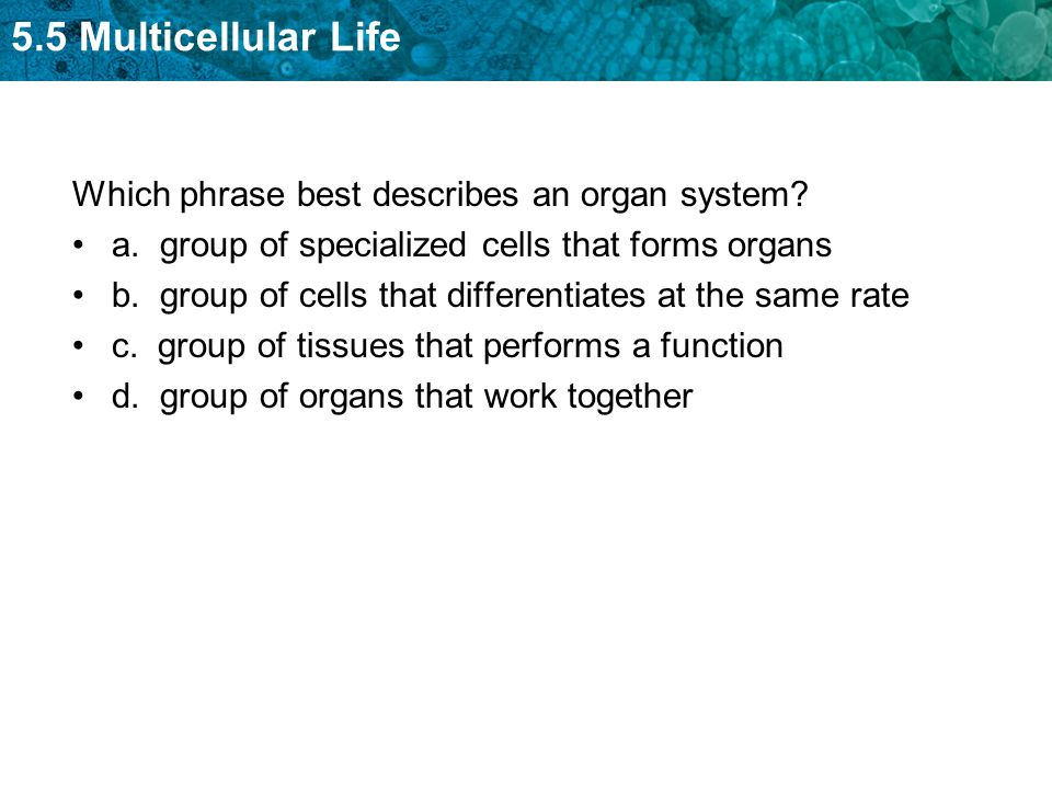 KEY CONCEPT Cells work together to carry out complex functions ...
