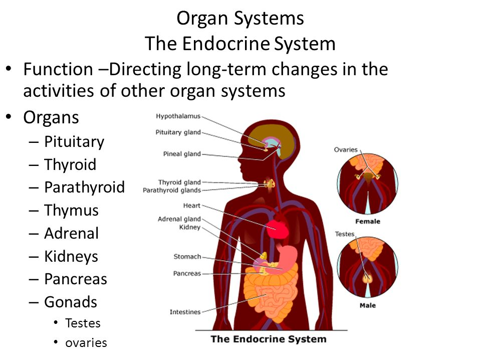 anatomy ch 1 an introduction ppt video online download