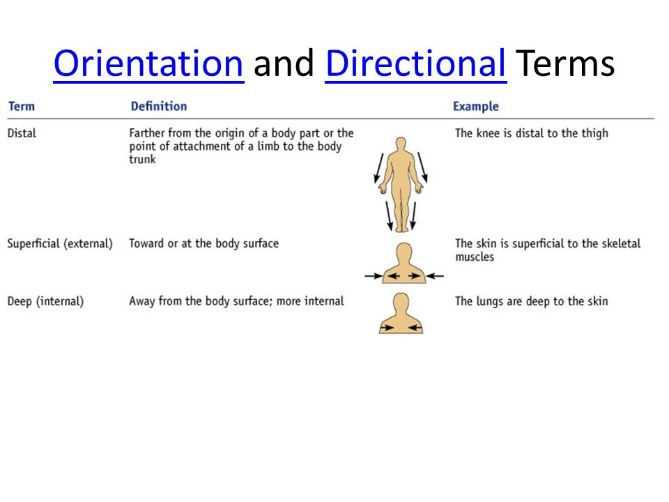 College Essays, College Application Essays - Directional terms ...