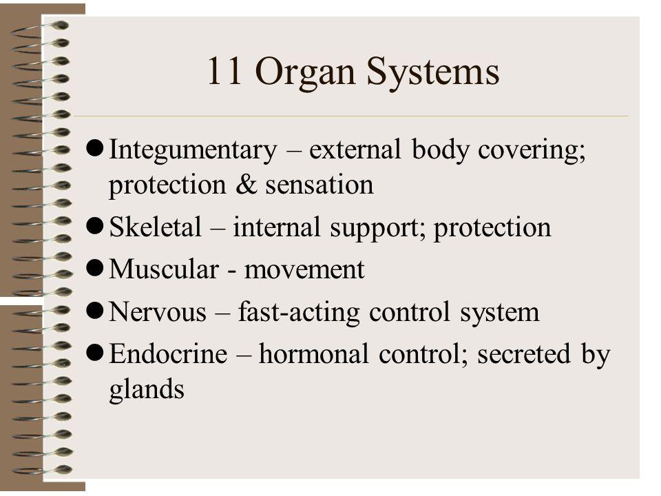 Erfreut Komponenten Des Systems Pokrownym Bilder - Anatomie und ...