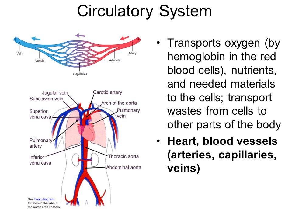 Transport Body Parts : Taks objective the human body system th grade blitz