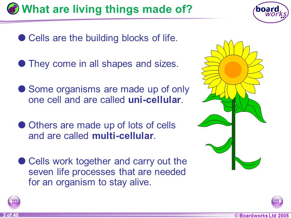 Ks3 biology 7a cells ppt video online download 3 what ccuart Image collections