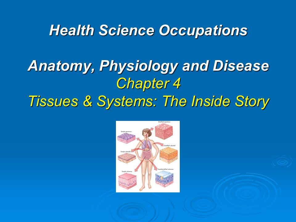 Health Science Occupations Anatomy, Physiology and Disease Chapter 4 ...
