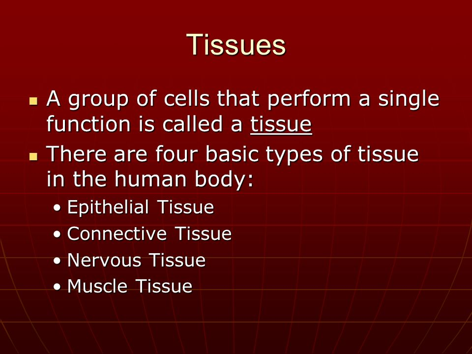chapter 30 ms unger how is the human body organized and regulated, Muscles