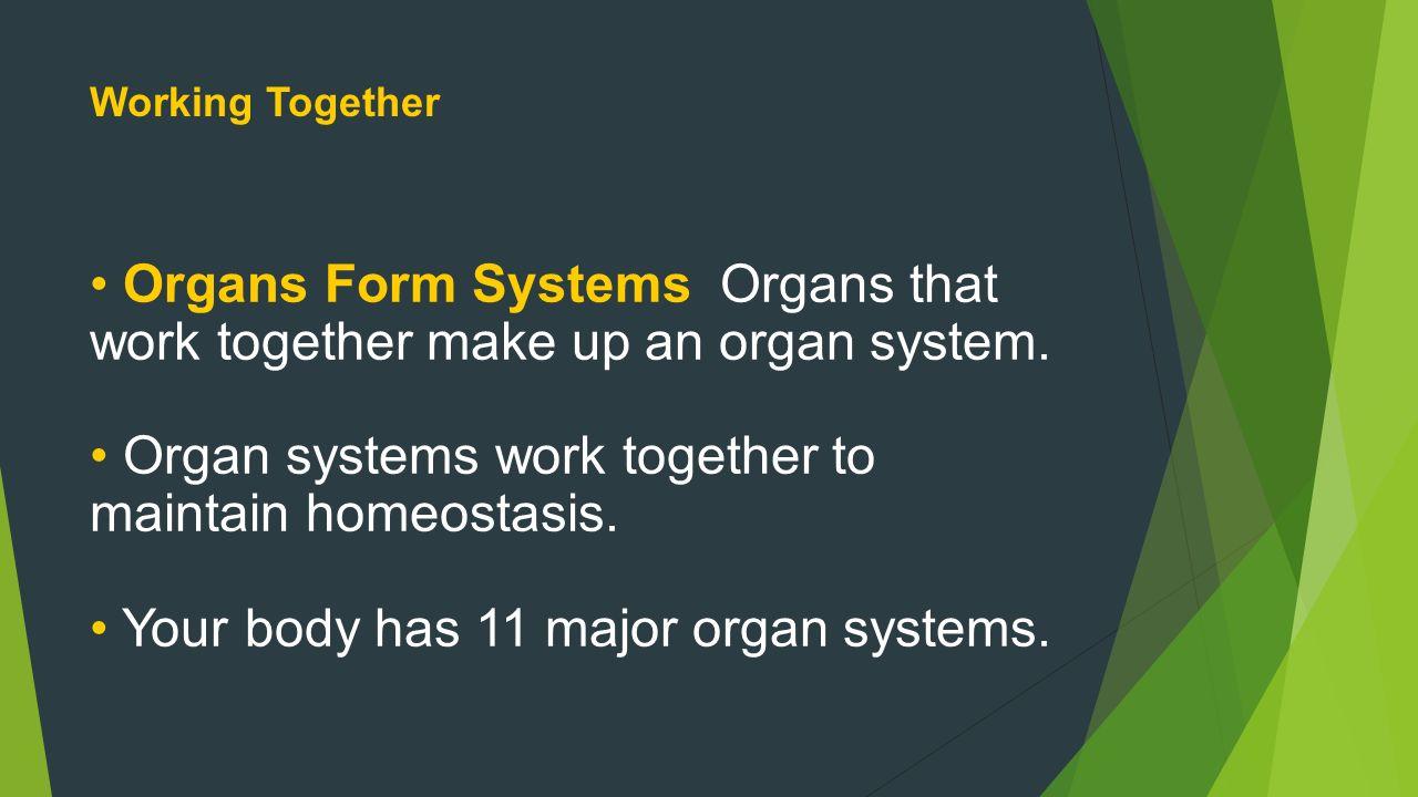 body systems work to maintain homeostasis