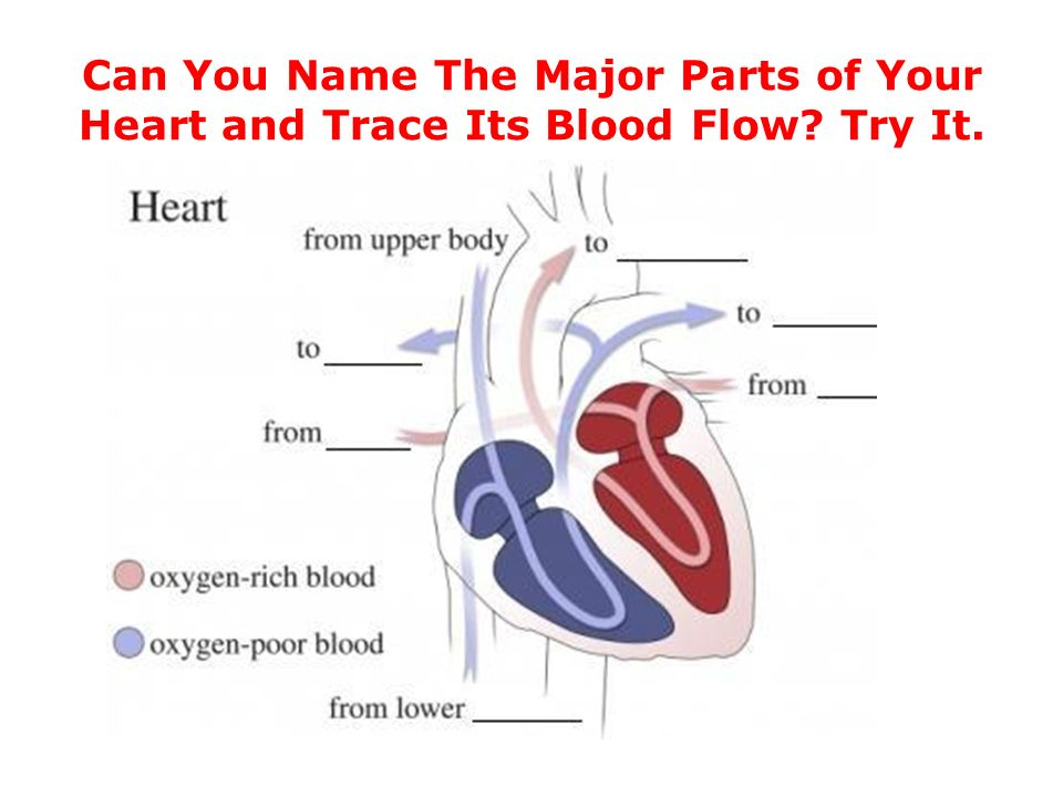 how to remember parts of the heart