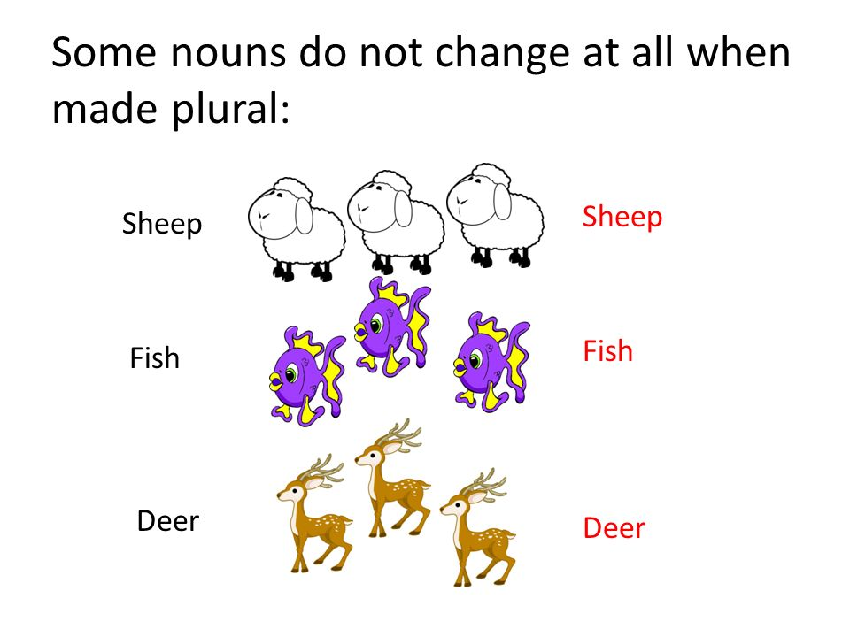 Plural and singular nouns ppt video online download for Plural of fish