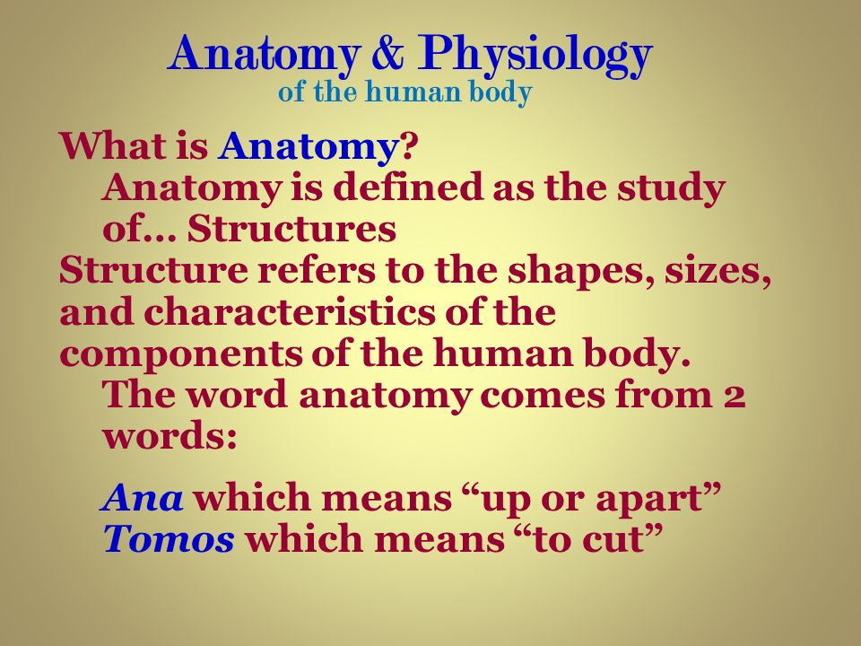 What do anatomy mean