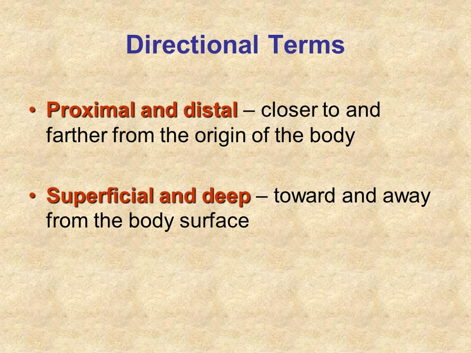 Directional Terms Proximal and distal – closer to and farther from the origin of the body.