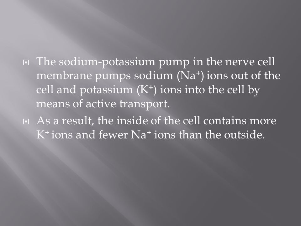 The sodium-potassium pump in the nerve cell membrane pumps sodium (Na+) ions out of the cell and potassium (K+) ions into the cell by means of active transport.