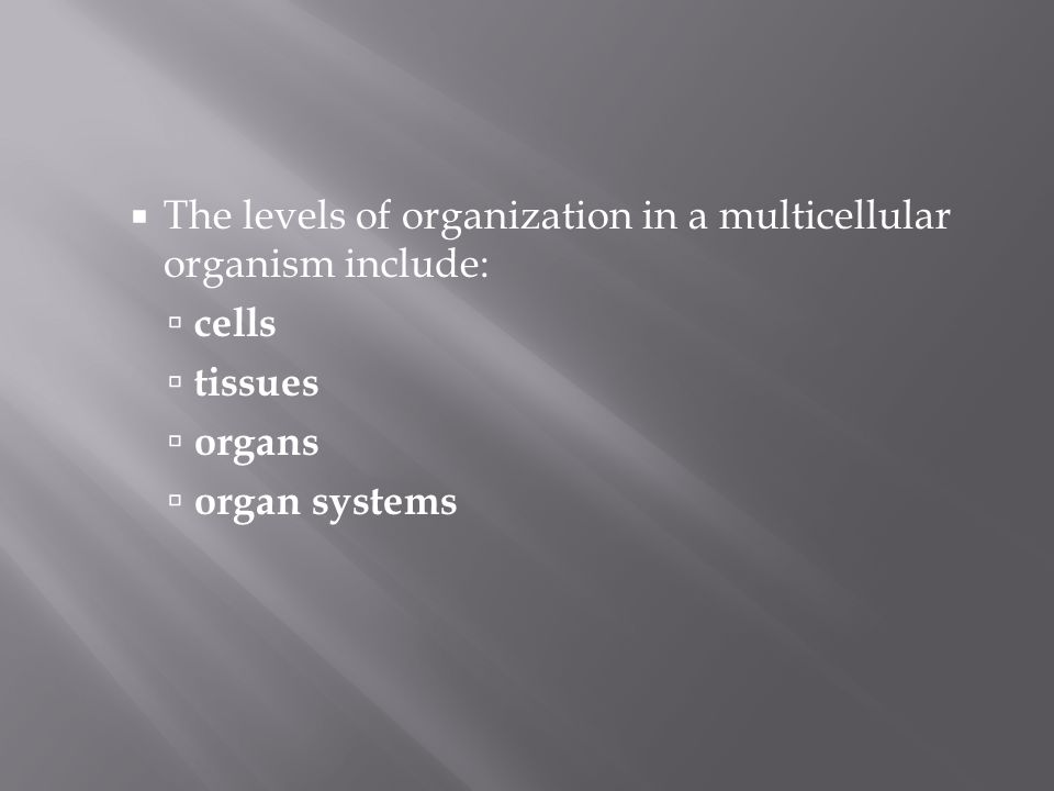 The levels of organization in a multicellular organism include: