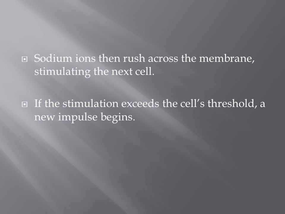 Sodium ions then rush across the membrane, stimulating the next cell.