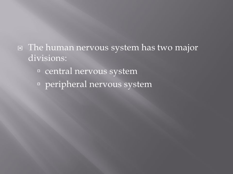 The human nervous system has two major divisions: