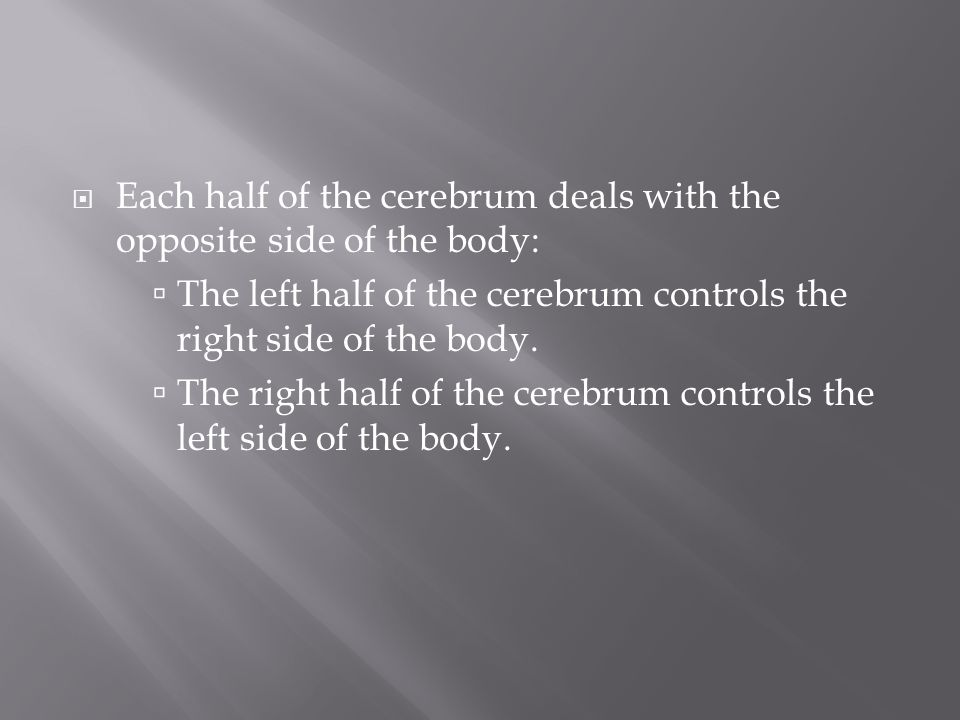 Each half of the cerebrum deals with the opposite side of the body: