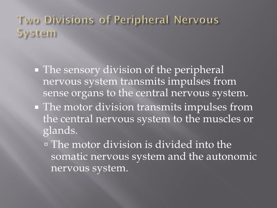 Two Divisions of Peripheral Nervous System