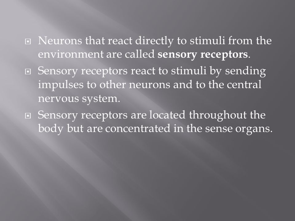 Neurons that react directly to stimuli from the environment are called sensory receptors.