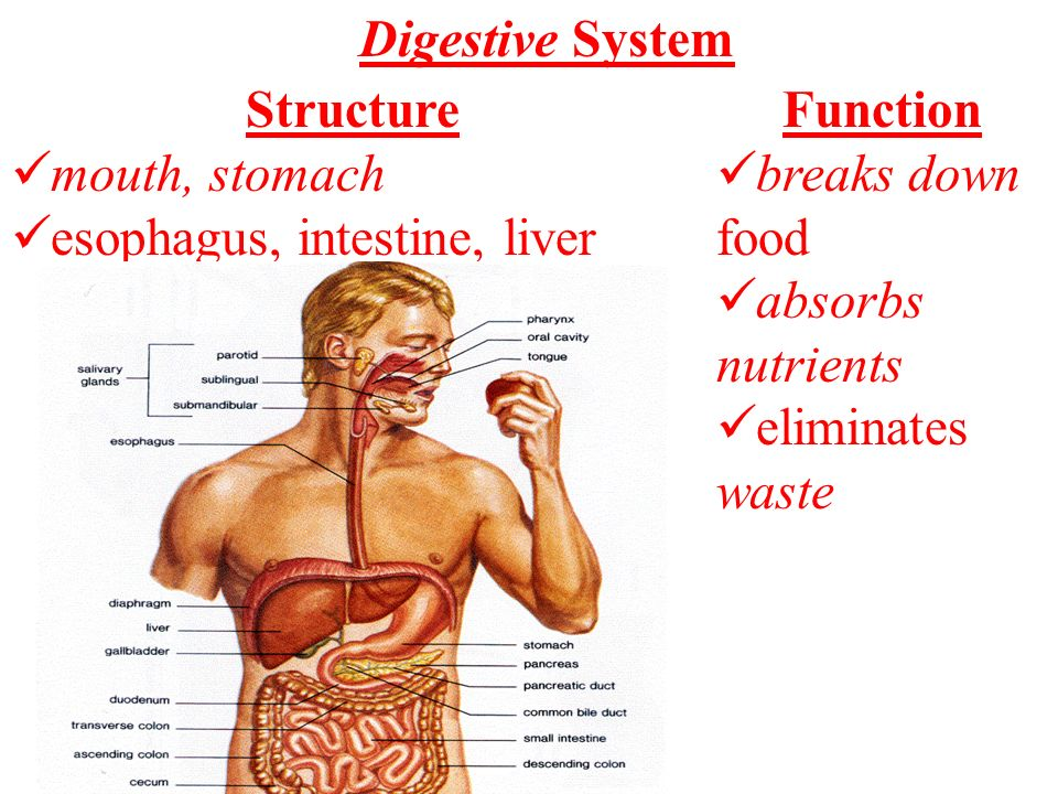 Chapter 3 Organization Of The Body Body Systems Tissues Ppt