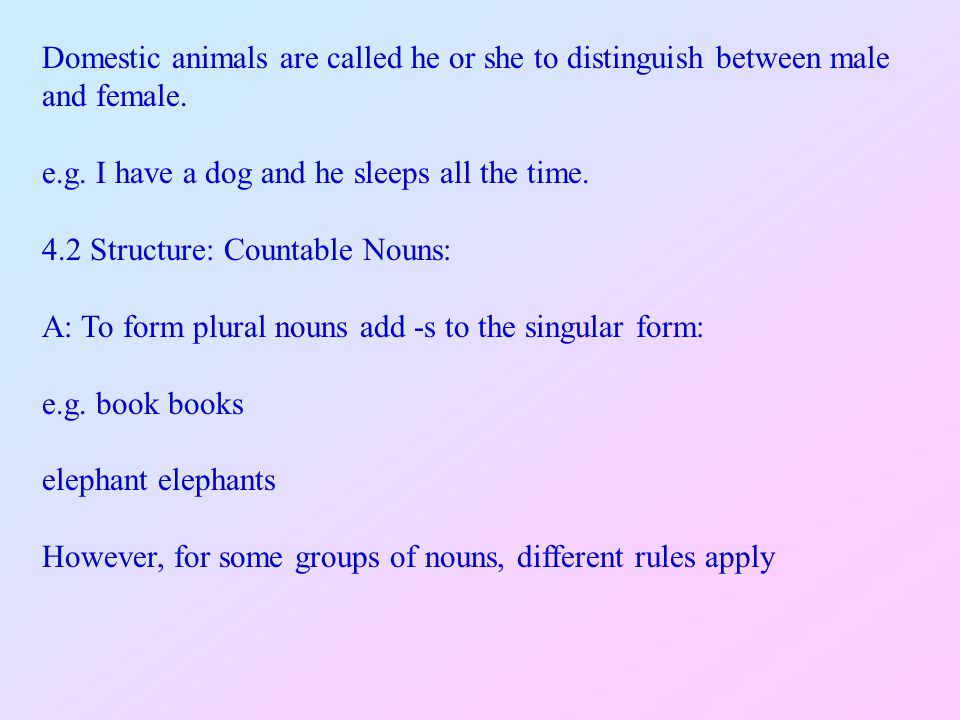 Plural Form Of Hostess Plural Form Of Hostess English