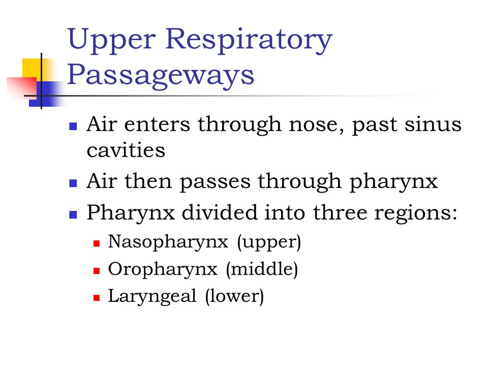 Upper Respiratory Passageways