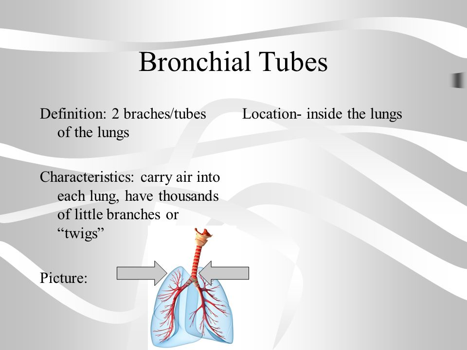 Warm up respiratory system reading and questions ppt video 23 bronchial tubes ccuart Gallery