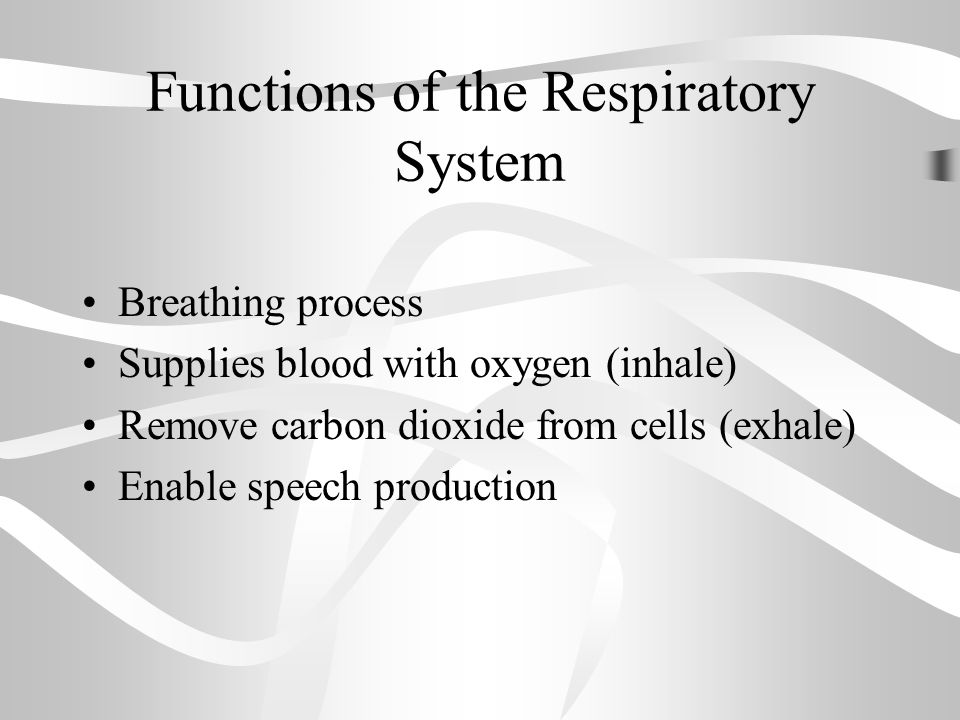 Carbon Dioxide Removal Systems : Warm up respiratory system reading and questions ppt