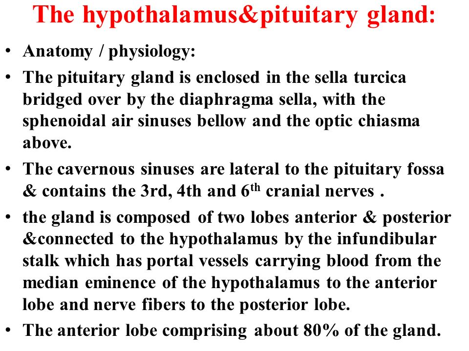 how does the relationship between hypothalamus and pituitary gland