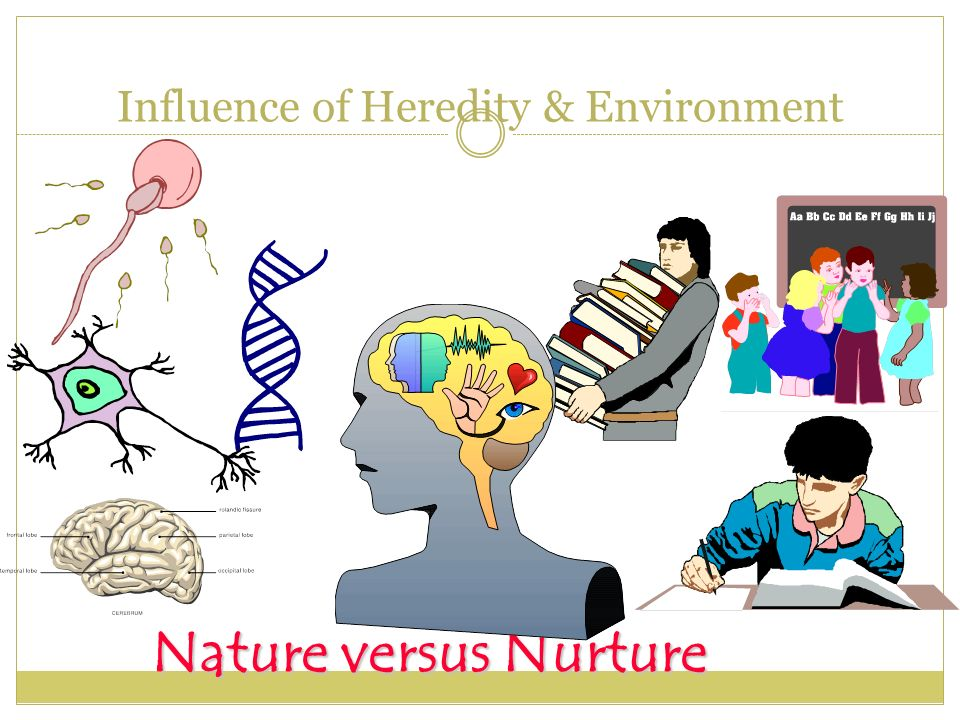 heredity vs environment developmental influences Hereditary and environmental influences on hum an behaviour and development the main research qu estion in this project was therefor e how genetic and env ironmental factors.
