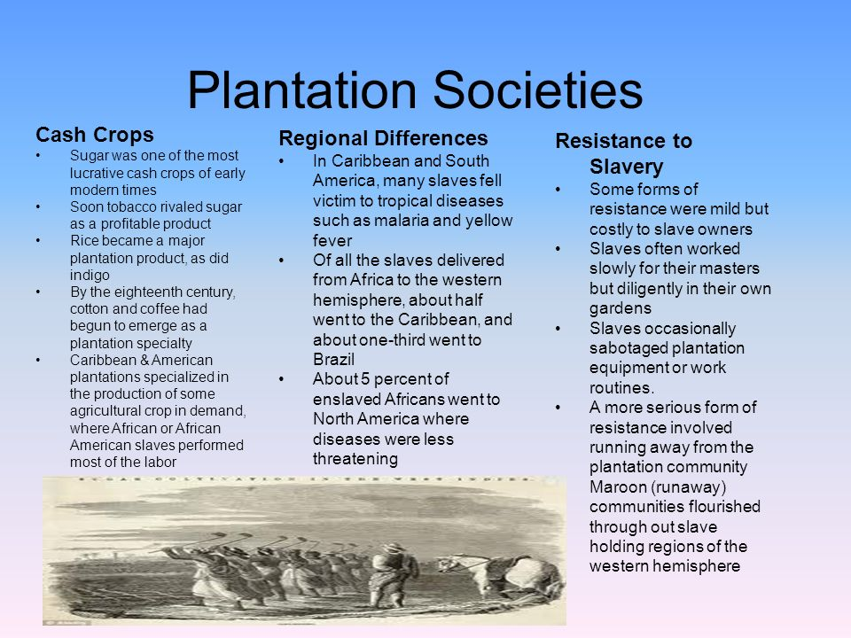 plantation society in the caribbean Characteristics of society and culture review the file below on the topic caribbean society & culture plantation_society_and_culture__1_pdf.