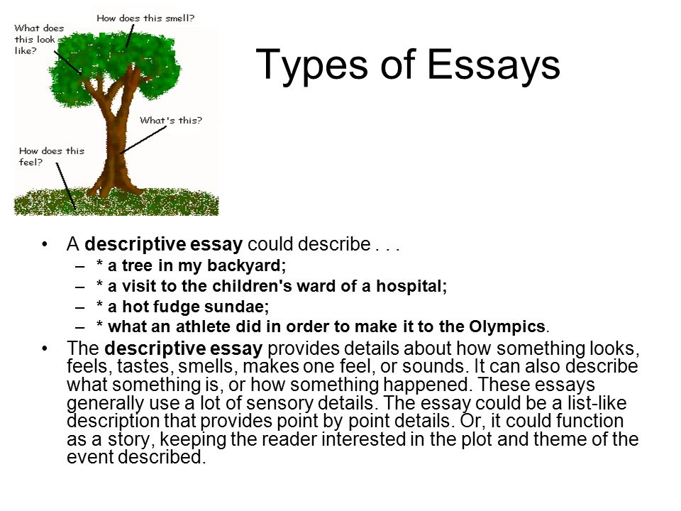 descriptive essays backyard