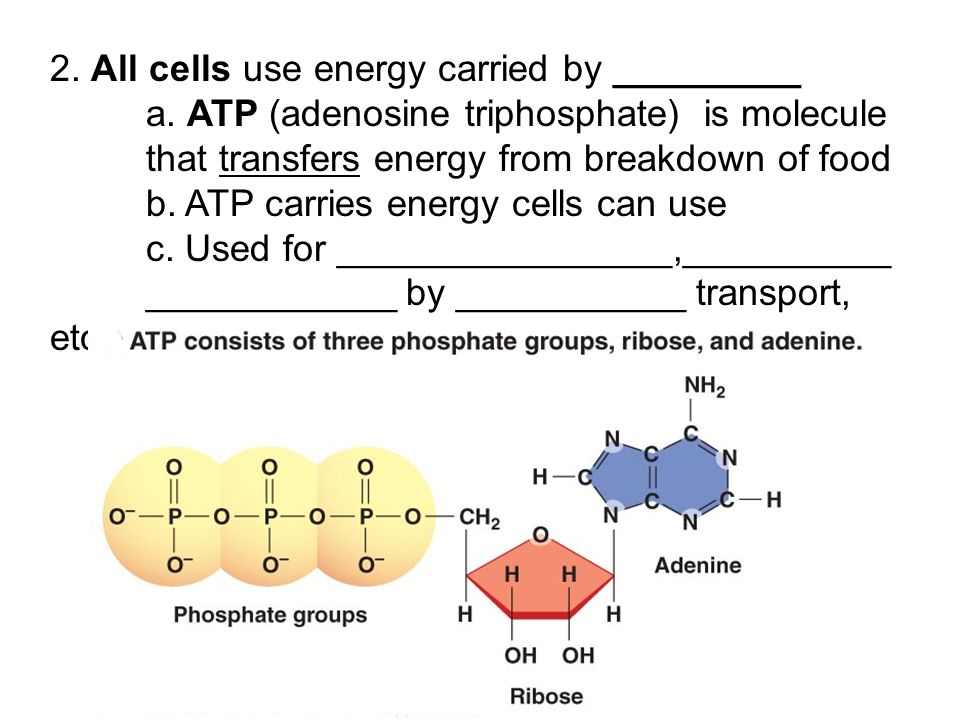Chapter 4: Cells and Energy - ppt download