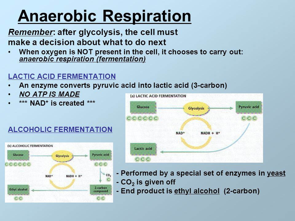 how to carry out an aerobic exercise Find out more about page this can be aerobic respiration, which needs oxygen, or anaerobic respiration during hard exercise an oxygen debt may build.