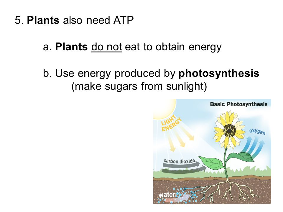 Plants That Do Not Need Sunlight Plants That Do Not Need