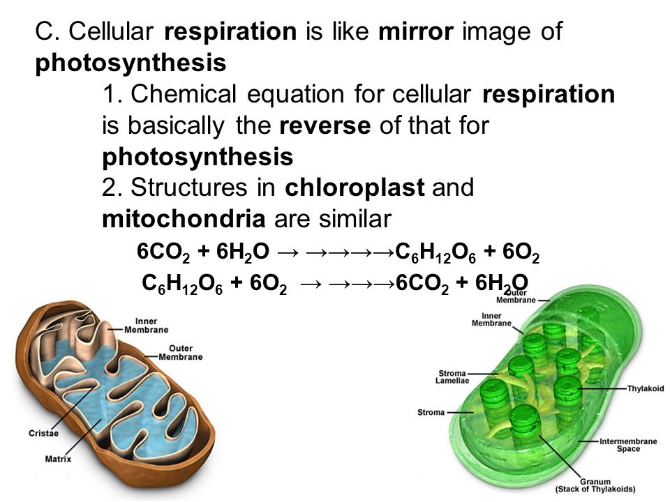 the chemistry behind cellular respiration