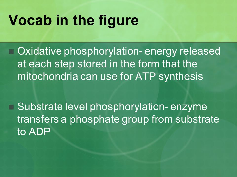 atp synthesis in glycolysis substrate level phosphorylation Your body is always using energy this energy, in the form of atp, is generated within your cells through substrate-level phosphorylation or.