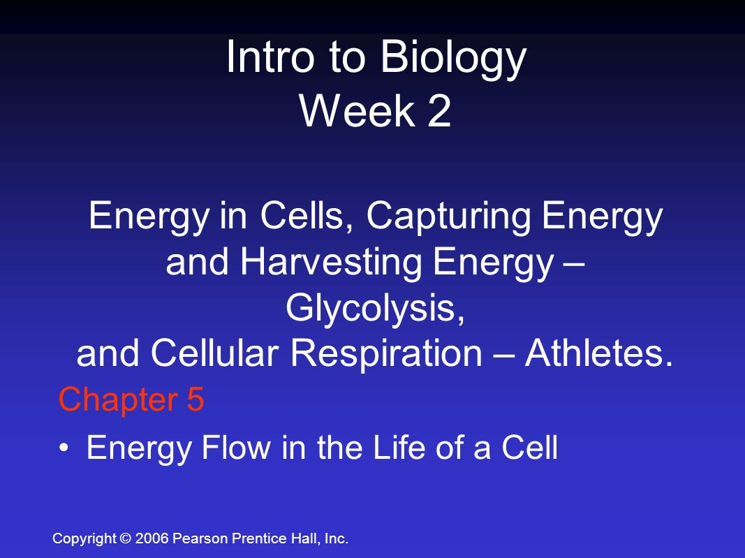 intro to biology Exploring the way life works: the science of biology  mahlon hoagland, bert dodson, judy hauck ©2001  intro computer science (cs0) networking & security.