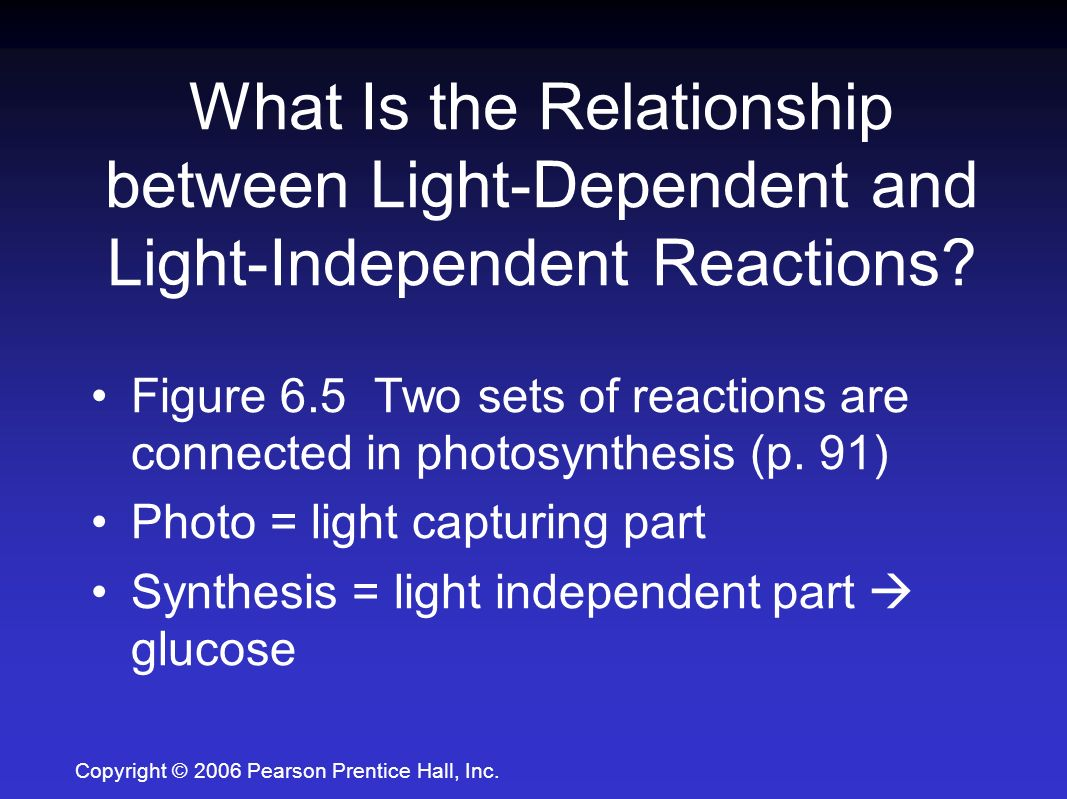2 explain the relationship between light dependent and independent reaction