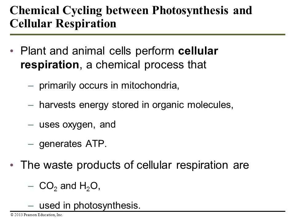 Cellular Respiration: Obtaining Energy from Food - ppt ...