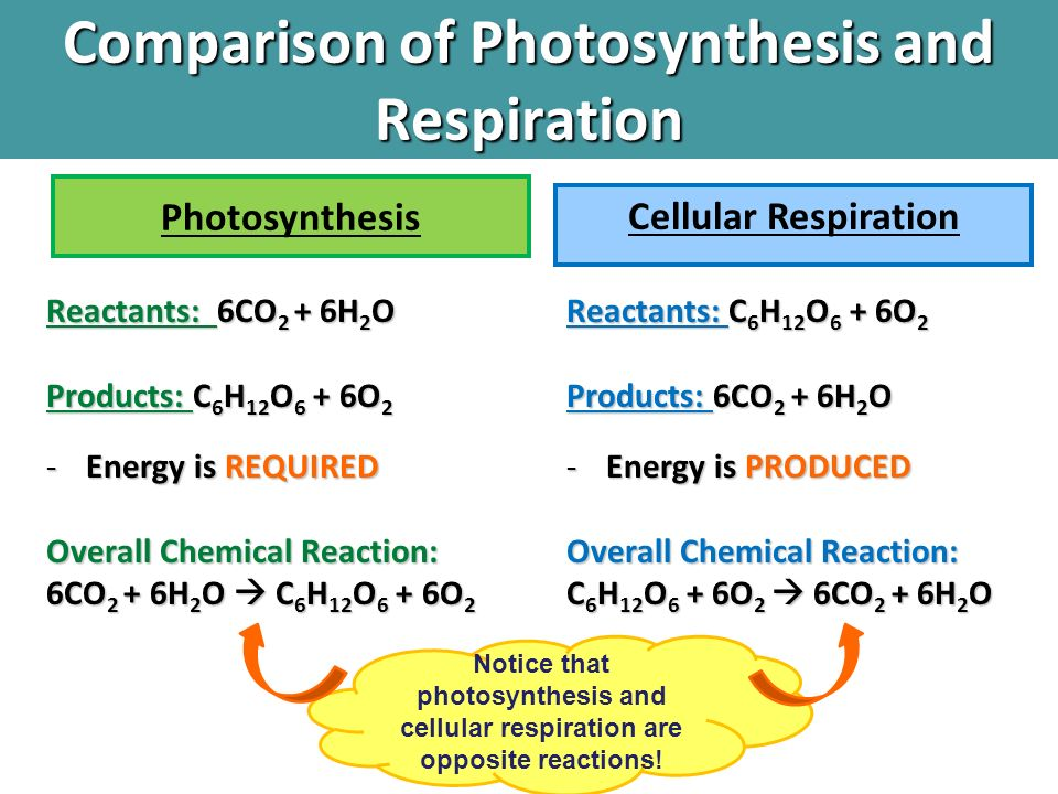 what are usually the actual reactants and also programs with phone respiration