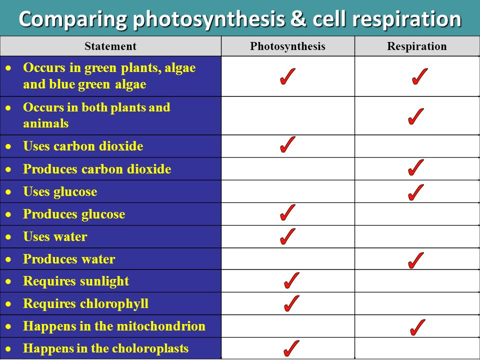compare photosynthesis and respiration