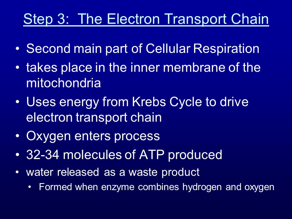 Step 3: The Electron Transport Chain