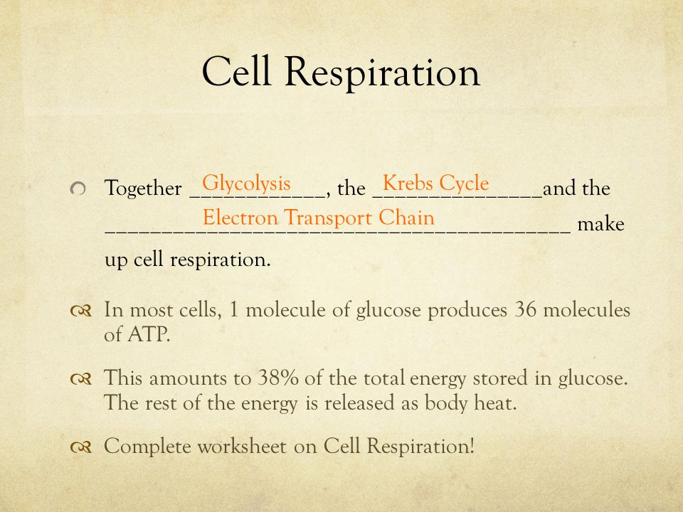 Cellular Respiration Definition: Gradual release of energy by the ...