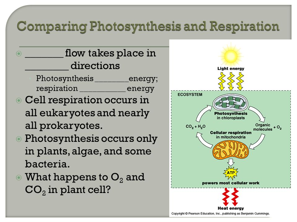 comparison between cellular respiration and photosynthesis How can the answer be improved.