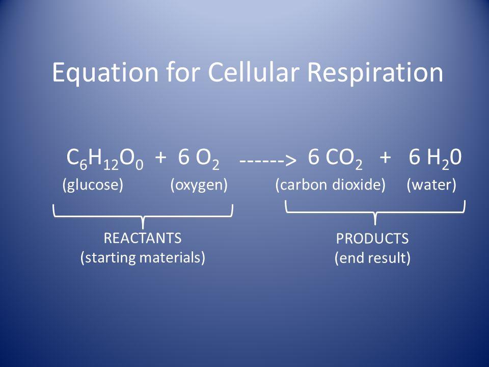 Equation for Cellular Respiration